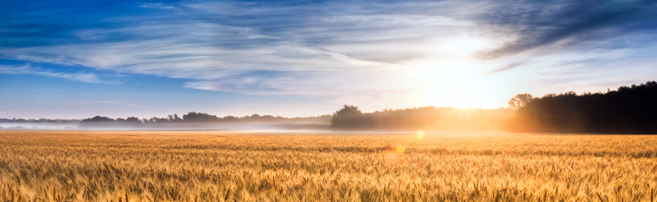 a wide-open wheat field at sunrise.